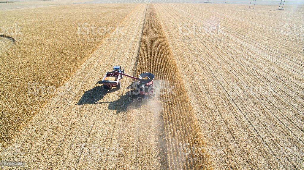 Harvesting Corn with Combine stock photo
