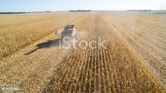 istock Harvesting Corn with Combine 614252864