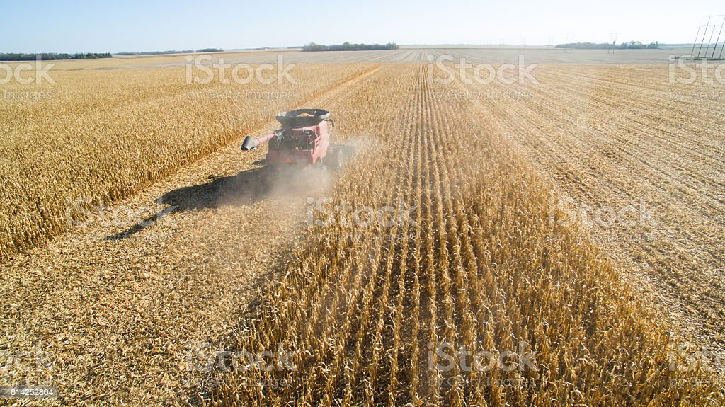 Harvesting Corn with Combine stock photo