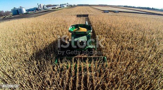 istock Harvesting Corn with Combine 614306122