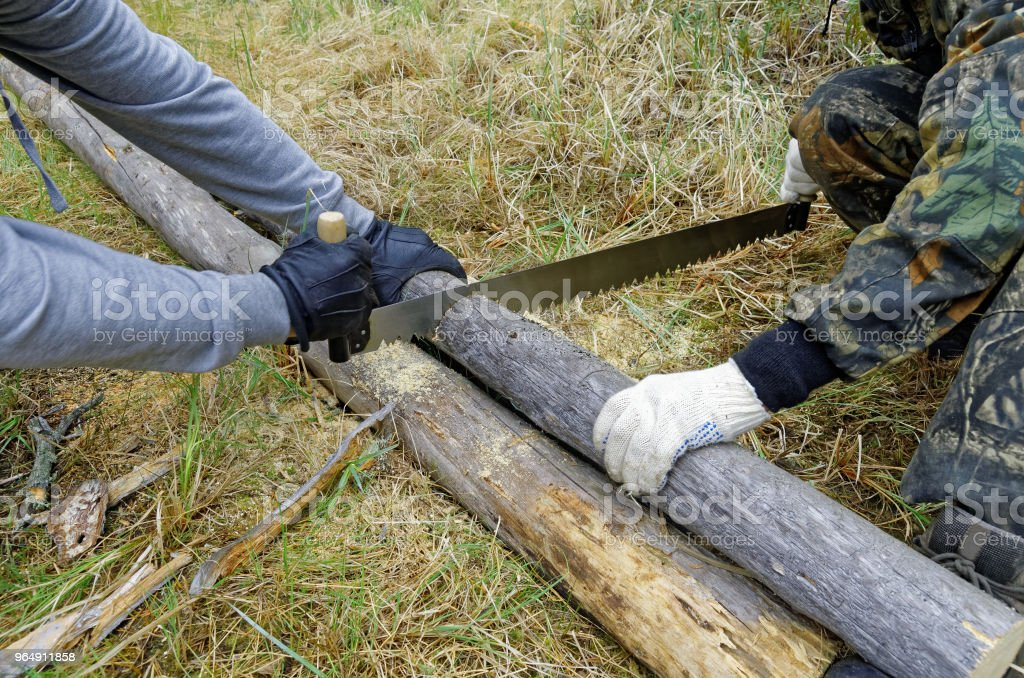 Harvesting firewood for the fire in the taiga royalty-free stock photo