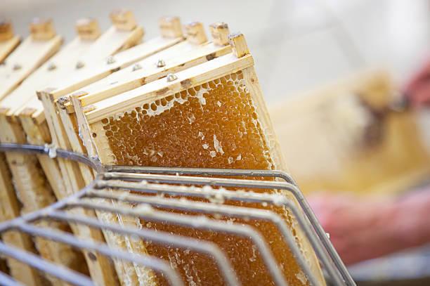 Ernten frischen Honig vom Biene Bienenkorb – Foto