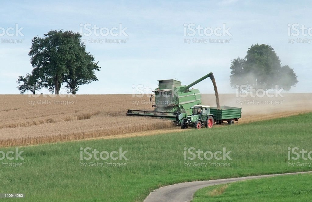 harvesting harvester on a crop field royalty-free stock photo