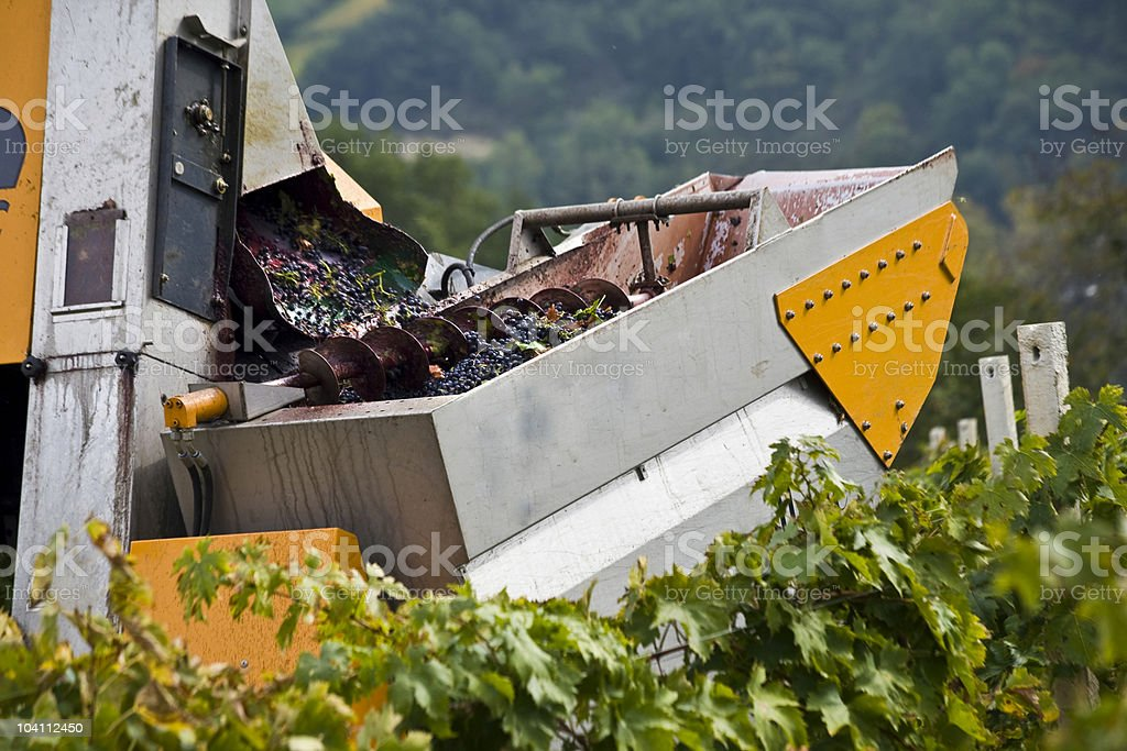 Harvesting in Abruzzo royalty-free stock photo