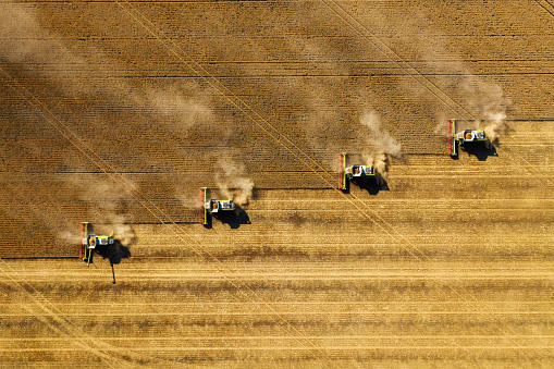 Dust rising from combine during crop harvesting, no-till technology professional occupation.