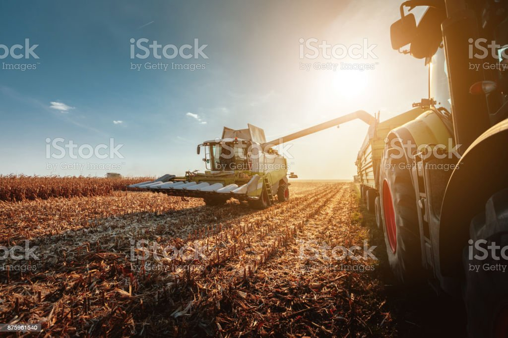 Harvesting in autumn stock photo