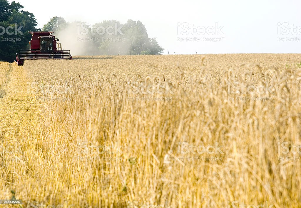 harvesting in Illinois - combine sharp, wheat soft royalty-free stock photo