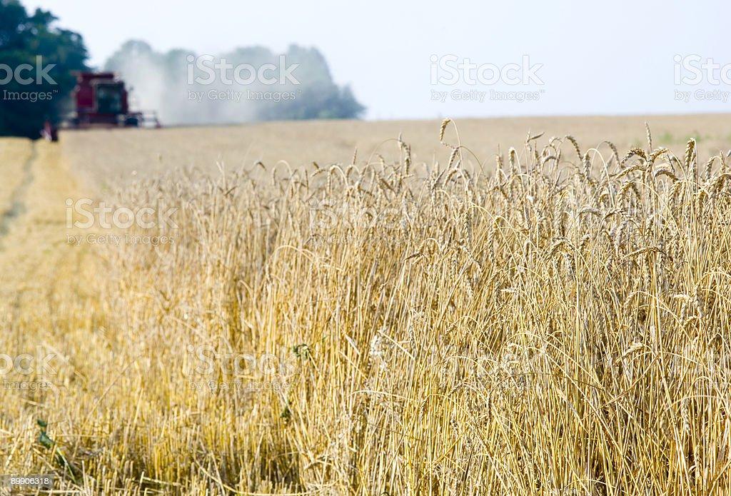Собирать урожай пшеницы в штате Иллинойс-sharp, сочетаются мягкая Стоковые фото Стоковая фотография