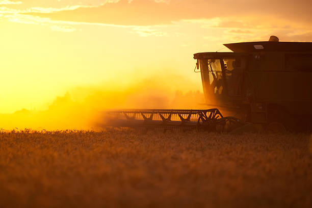 Harvesting Into The Sunset stock photo