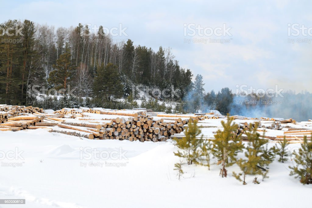 Harvesting logs. Stacks of cut timber ready to be hauled out of a logging area. Smoke. Sunny day. Winter time. Woodpile of freshly harvested logs. Nature of  Russia, Siberia Krasnoyarsk region. Polluting energies, pollution with smoke a non-renewable ener stock photo