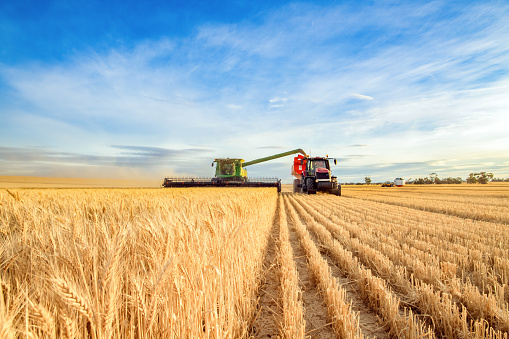 Harvesting machine approaching with the foreground of golden wheat