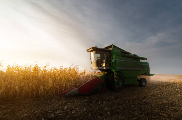Harvesting of corn field with combine in early autumn stock photo