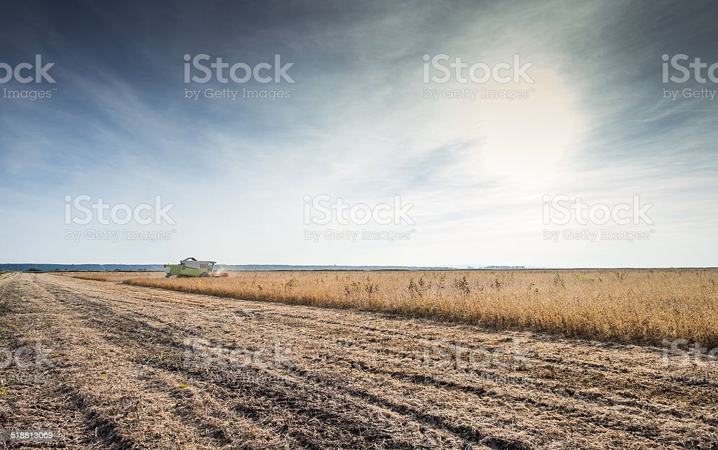 Harvesting of soy bean stock photo