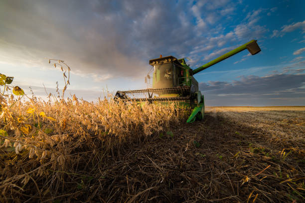 Harvesting of soybean field stock photo