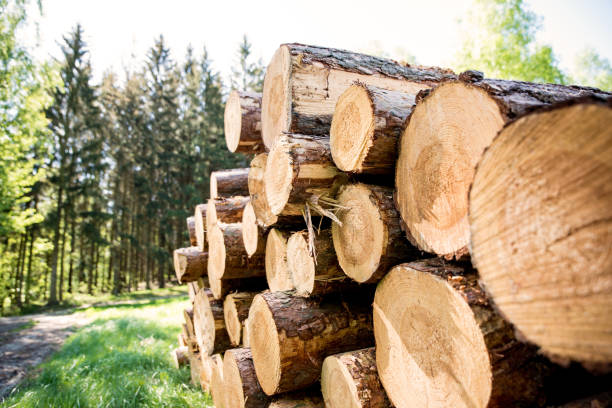 harvesting of wood in the forest. - industria forestale foto e immagini stock