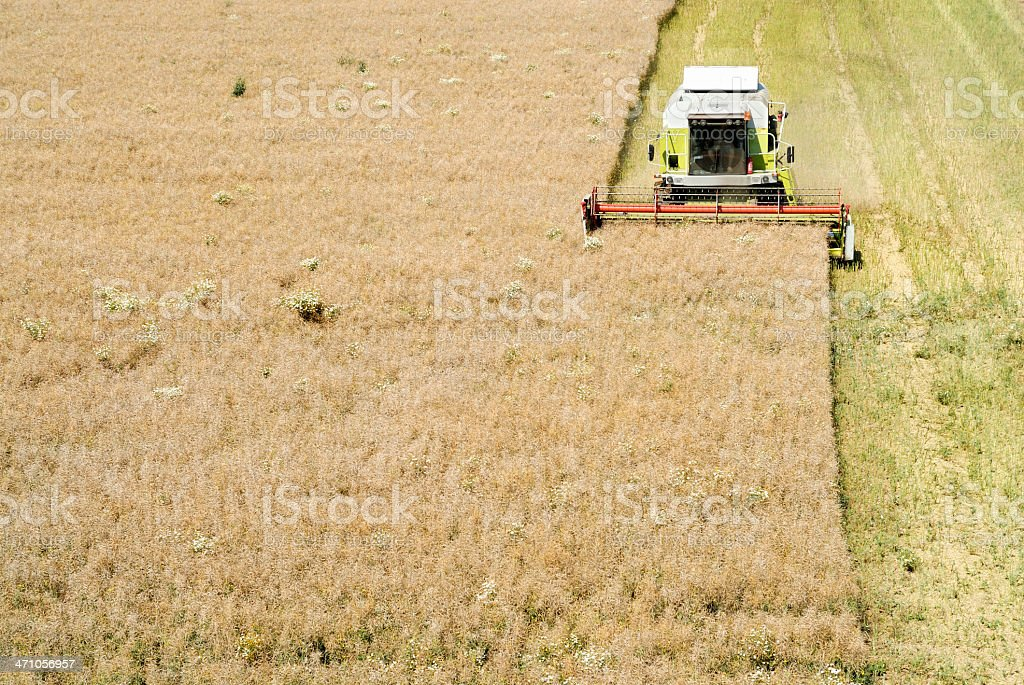 Harvesting oilseed royalty-free stock photo