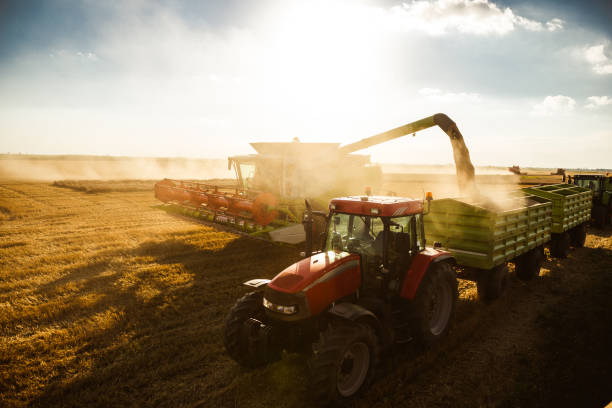 harvesting on a sunset - crop stock pictures, royalty-free photos & images
