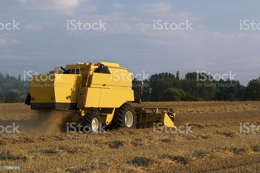 Harvesting royalty-free stock photo