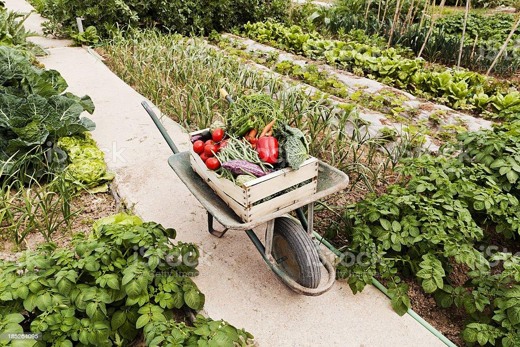 Harvesting royalty-free stock photo