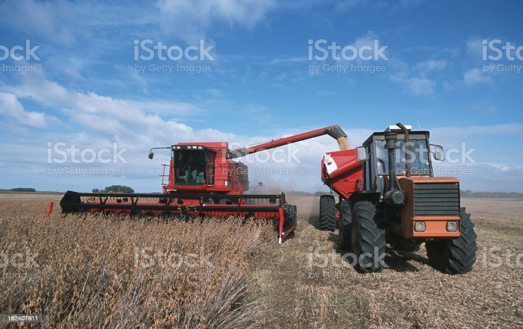 Harvesting Soybeans royalty-free stock photo