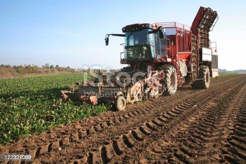Big harvest machine on the sugar beetfield