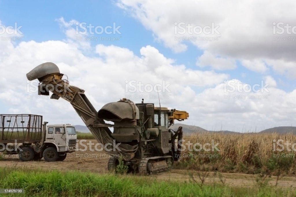 Harvesting sugar cane royalty-free stock photo