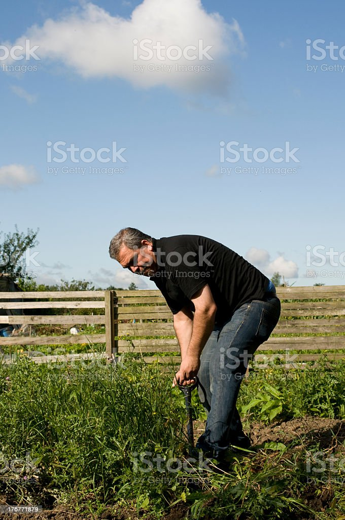 Harvesting the crop royalty-free stock photo