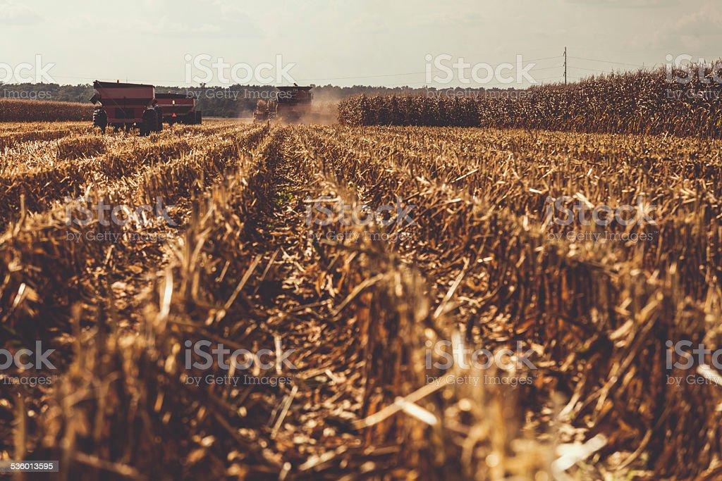 Harvesting the Field stock photo
