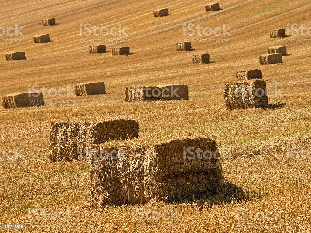 Harvesting the Hay royalty-free stock photo