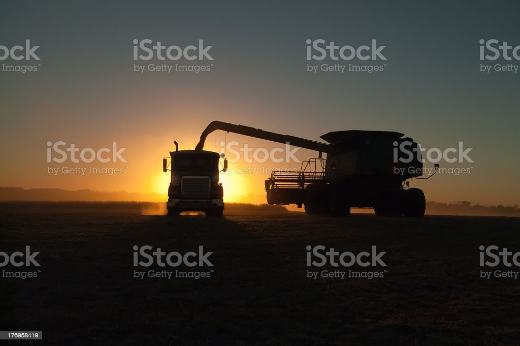 Harvesting trucks at dawn on the farm stock photo