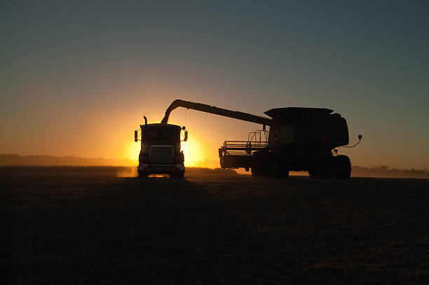 Harvesting trucks at dawn on the farm stock photo