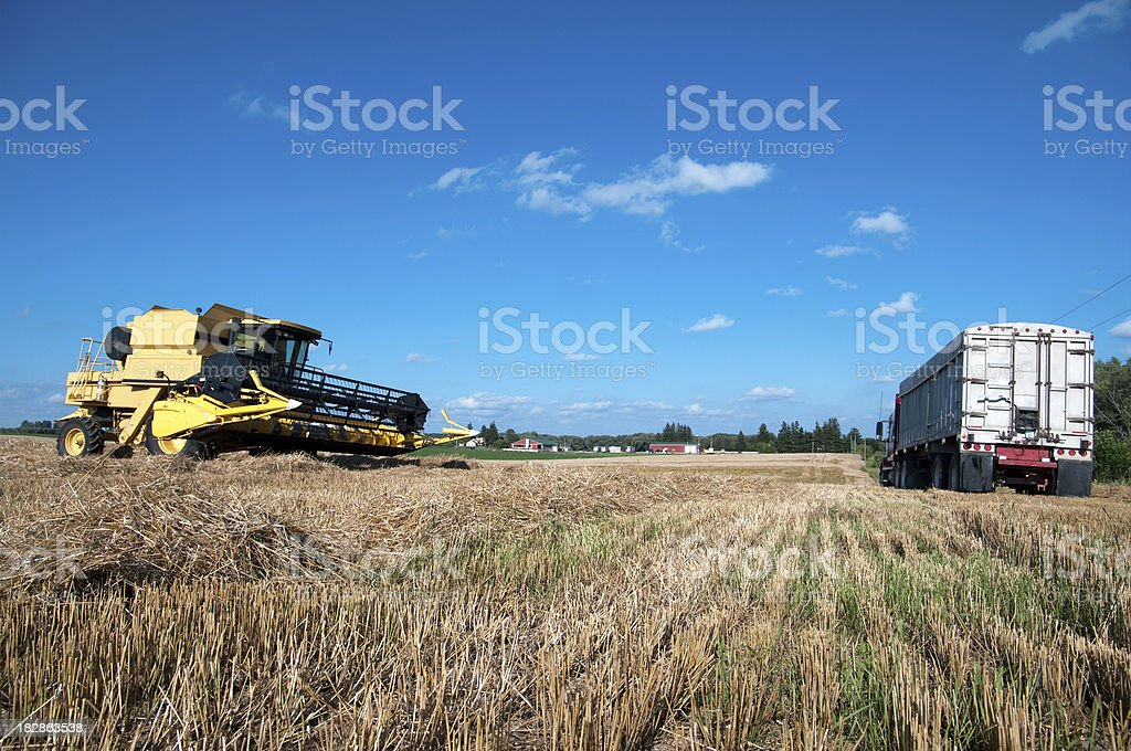 Harvesting Wheat Crop stock photo