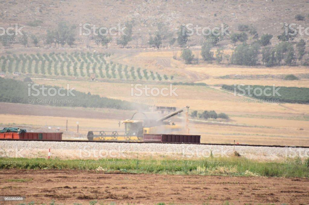 Harvesting wheat in the field - Zbiór zdjęć royalty-free (Bez ludzi)
