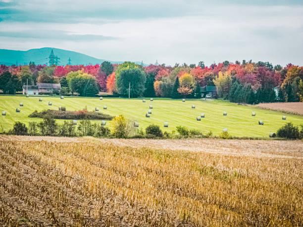 Harvests in autumn. stock photo