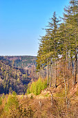 Harz mountains with coniferous trees in the forest under a blue sky.