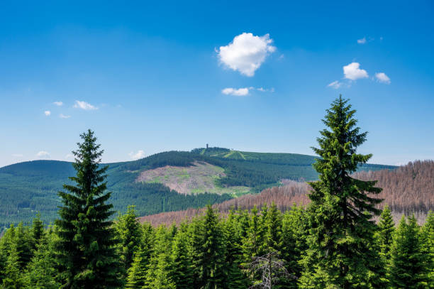 Nationalpark Harz – Foto