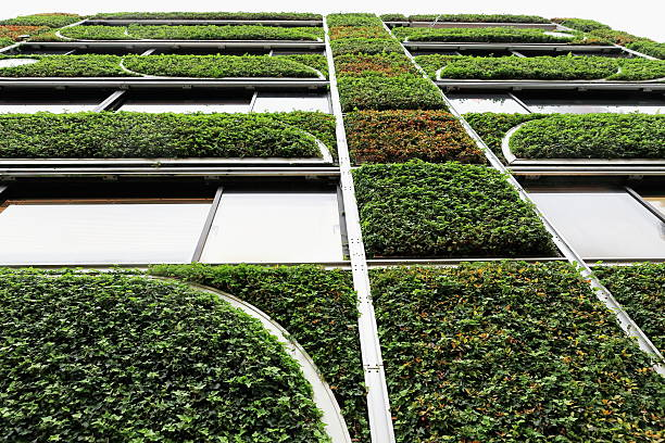 hasegawa green building in shiba koen. tokyo-japan. 8196 - ivy building imagens e fotografias de stock