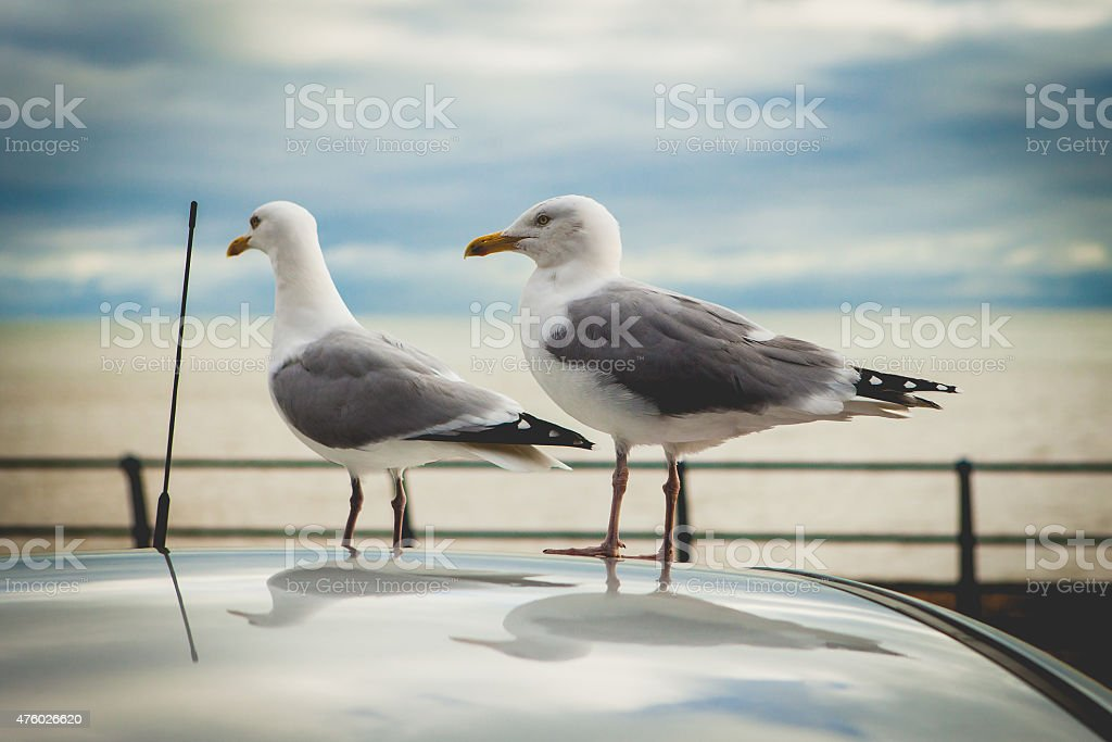 Hastings stock photo