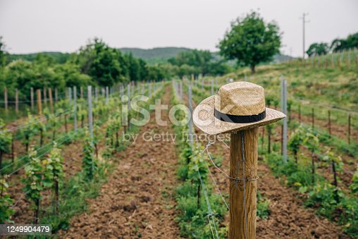 Hat of a farmer in the middle of the wineyard