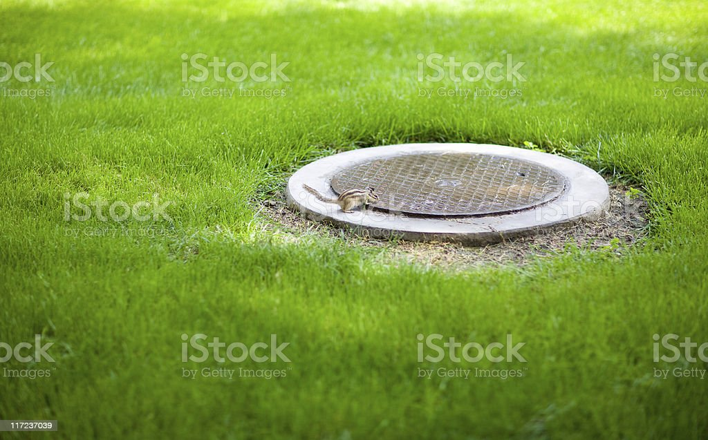 Hatch, Grass and bober royalty-free stock photo