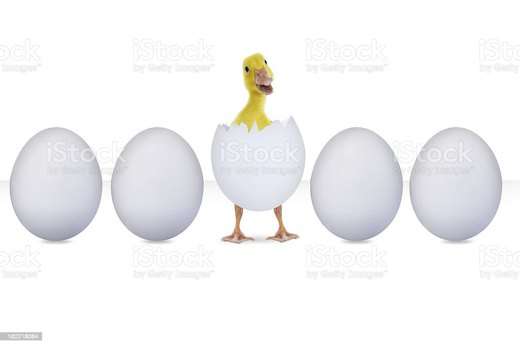 Hatched egg isolated on white royalty-free stock photo