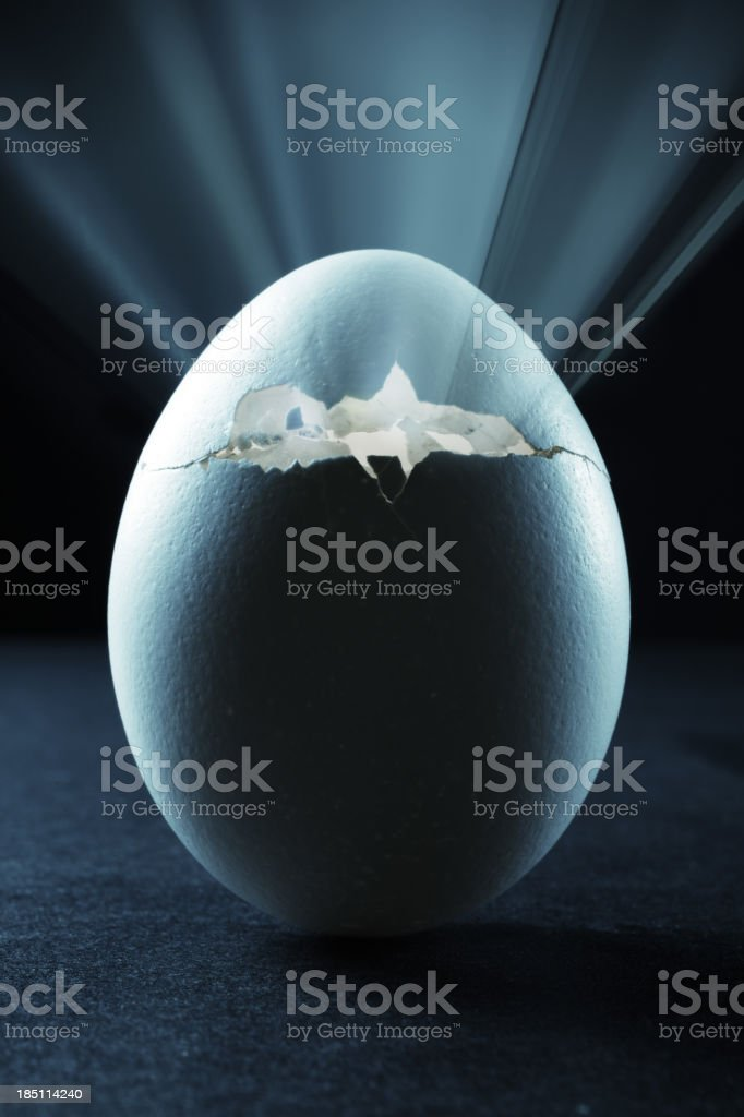 Hatching Egg stock photo