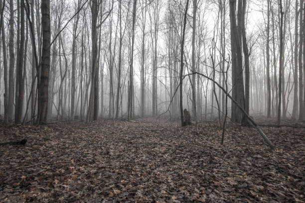 Haunted And Enchanted Foggy Forest Landscape stock photo