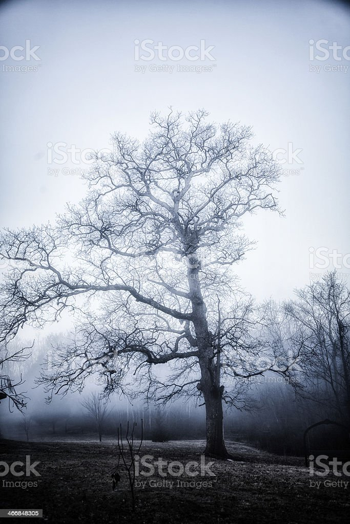 Haunted Forest royalty-free stock photo