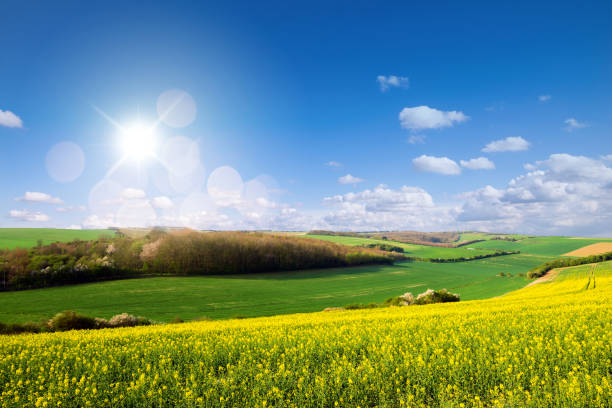 Hauts de France coast in the spring rapeseed fields in bloom hauts de france stock pictures, royalty-free photos & images
