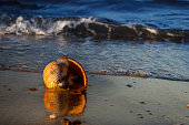 A shell by the seashore with a living creature in it, illuminated by the morning sun.