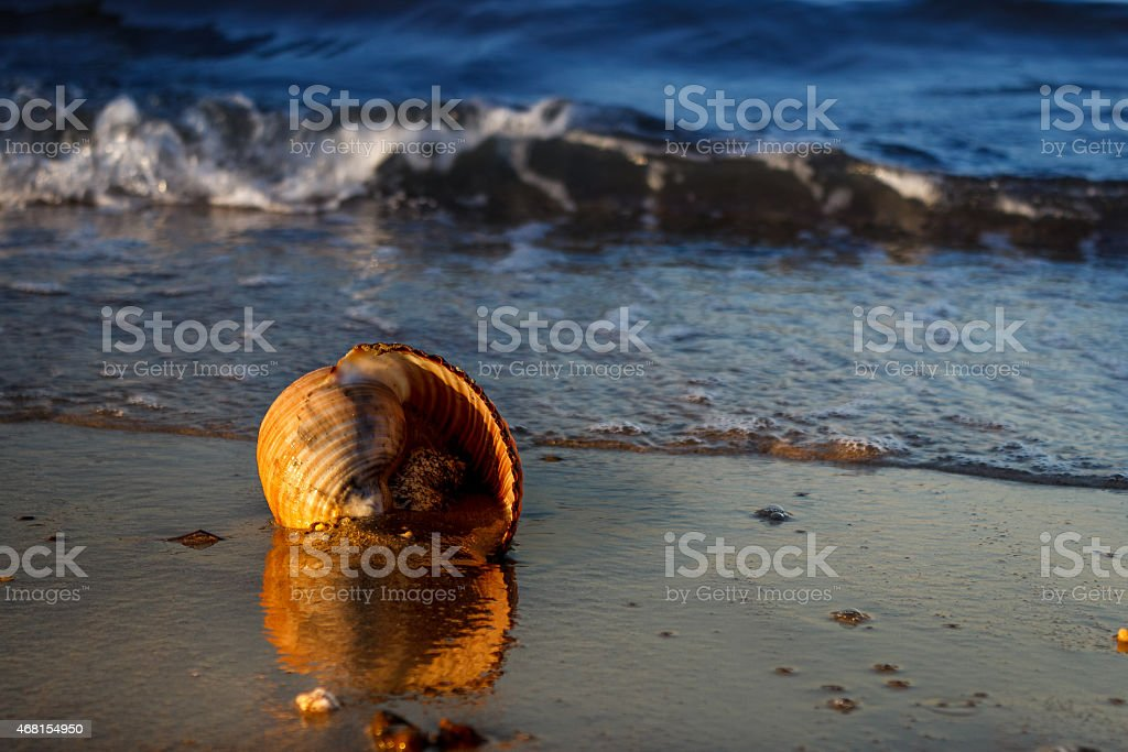 Have a great summer stock photo