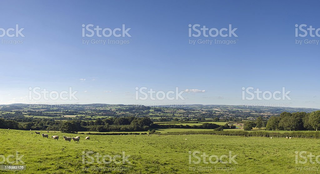 Have you any wool? royalty-free stock photo