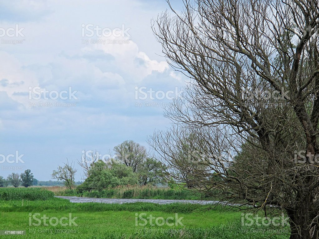 Havel river landscape with willow tree (Brandenburg) stock photo