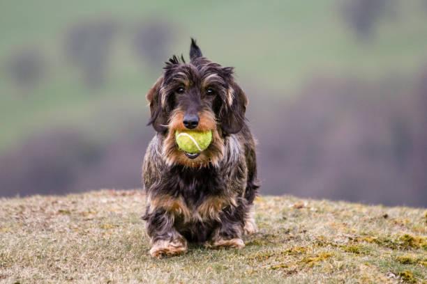Mit einem Ball! – Foto